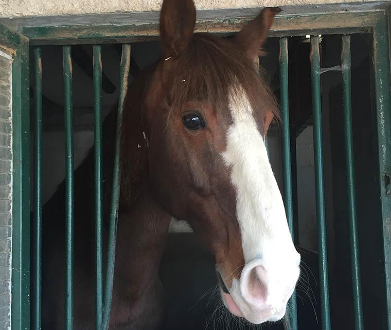 caballo_los_porches