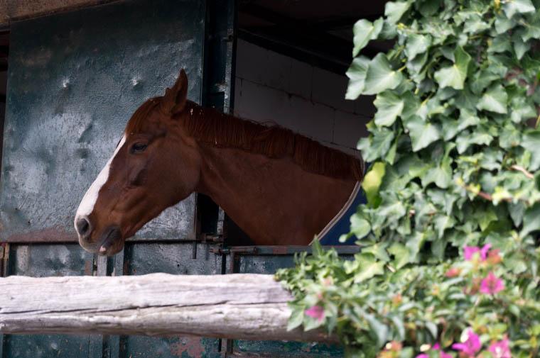 caballos-los-porches01